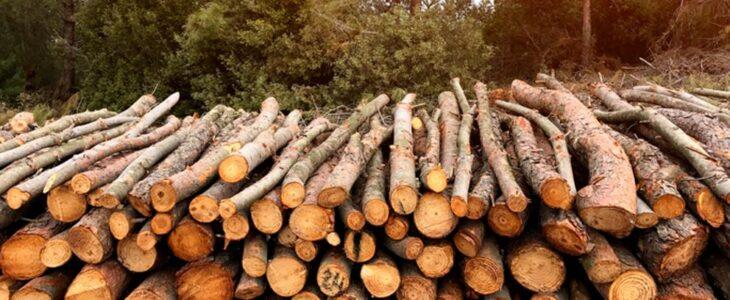 quemar-biomasa-da-vida-al-bosque