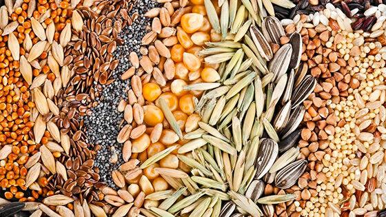 combustible semillas
