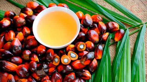 combustible aceite de palma